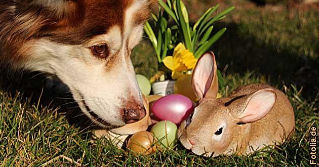 Osterurlaub Hund 2019 2020 Osterferien Urlaub Hundefreundliche